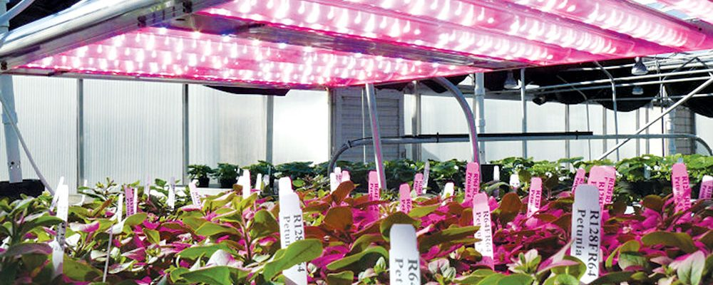 Sử dụng đèn Led máng phản quang trong nhà lưới sản xuất nông nghiệp giúp tiết kiệm năng lượng - Ảnh minh họa